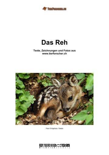 Wie sieht das Reh aus - Tierforscher.ch