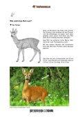 Wie sieht das Reh aus - Tierforscher.ch - Seite 2