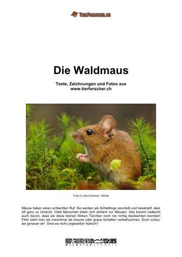 Waldmaus - Tierforscher.ch