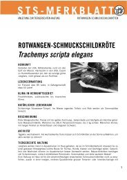 Rotwangen-Schmuckschildkröte - Schweizer Tierschutz STS