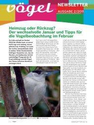 Newsletter 02/11 Beobachtungen und Beobachtungstipps im Februar