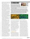 Mushroom-Manifesto - Page 4