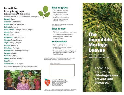 The Incredible Moringa Leaves - Trees for Life