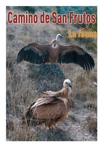 La Fauna en el Camino de San Frutos - Turismo de Segovia