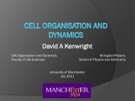 Cell organisation and dynamics - Physics at Lancaster University