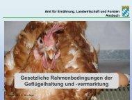 Gesetzliche Rahmenbedingungen der Geflügelhaltung und - Amt für ...