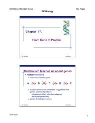 Transcription - Explore Biology