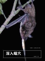 深入蝠穴 - Year of the Bat
