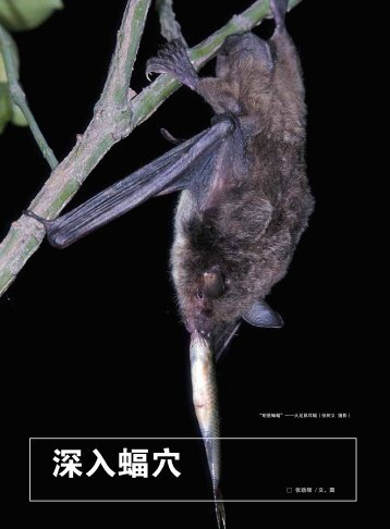 深入蝠穴 - Year of the Bat