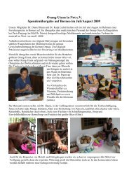 Orang-Utans in Not eV Spendenübergabe auf Borneo im Juli/August ...