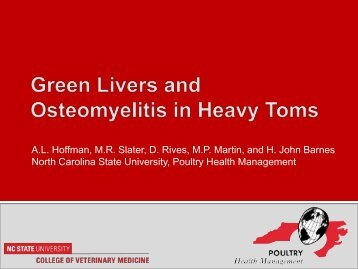 Green Livers and Osteomyelitis in Heavy Toms - North Carolina ...