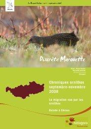 Discrète Marouette - Natagora