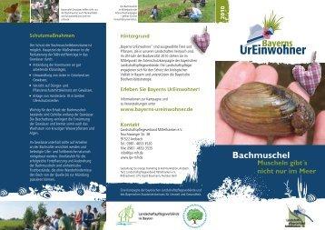 Flyer Bachmuschel - Regierung von Mittelfranken - Bayern