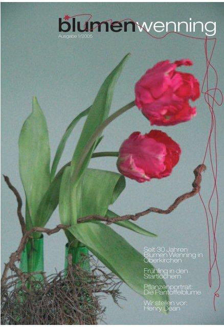 Die Pantoffelblume Wir stellen vor - Blumen Wenning