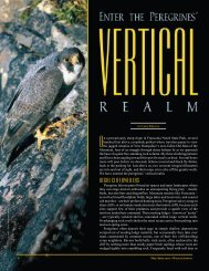 Vertical Realm - New Hampshire Fish and Game Department