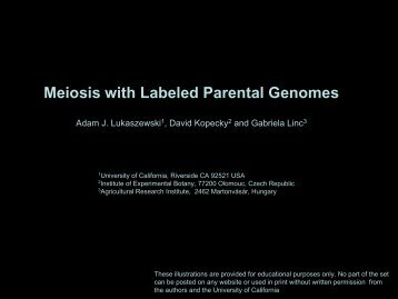 Meiosis with Labeled Parental Genomes