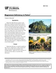 Magnesium Deficiency in Palms - Polk County Residential ...