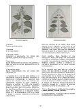 MUTIS: EL TRABAJO DE UN CIENTIFICO - Universidad del Norte - Page 2