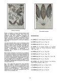 MUTIS: EL TRABAJO DE UN CIENTIFICO - Universidad del Norte - Page 3