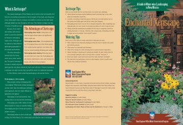 The Enchanted Xeriscape
