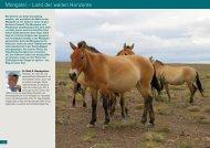 Mongolei – Land der weiten Horizonte - International Takhi Group