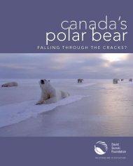 Canada's Polar Bear: Falling through the Cracks? - David Suzuki ...