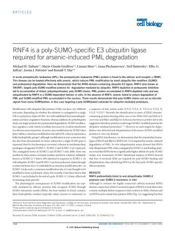 RNF4 is a poly-SUMO-specific E3 ubiquitin ligase required for ...