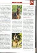 Züchterforum - Sportpferde Angerer - Seite 3