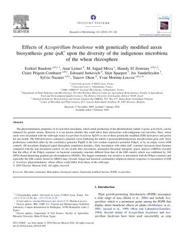 Effects of Azospirillum brasilense with genetically modified auxin ...