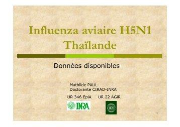 Influenza aviaire H5N1 Thaïlande - Flutrop CIRAD Avian Influenza ...