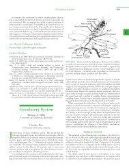 Circulatory System - Department of Evolutionary Biology