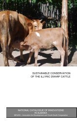sustainable conservation of the illyric dwarf cattle - Ideassonline.org
