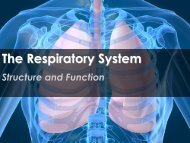The Respiratory System - Science with Mr. Enns