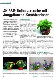 AK B&B: Kulturversuche mit Jungpflanzen ... - Arbeitskreis Beet