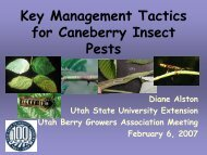 Key Management Tactics for Caneberry Insect Pests - Utah Pests ...