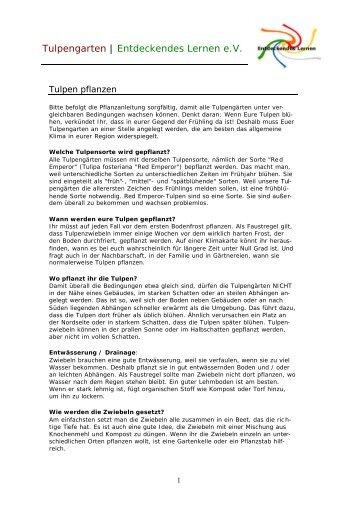 Pflanzanleitung ausdrucken - Tulpengarten - Entdeckendes Lernen eV