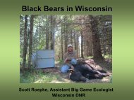 Black Bears in Wisconsin Wisconsin Department of Natural Resources