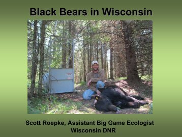 Black Bears in Wisconsin Wisconsin Department of Natural Resources