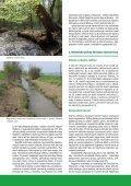 Moravská Amazonie a ostatní lužní lesy: konec, nebo ... - Hnutí DUHA - Page 2