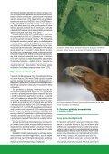 Moravská Amazonie a ostatní lužní lesy: konec, nebo ... - Hnutí DUHA - Page 4