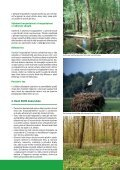 Moravská Amazonie a ostatní lužní lesy: konec, nebo ... - Hnutí DUHA - Page 5