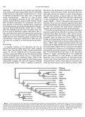 Phylogeny of the Carnivora (Mammalia): Congruence vs ... - Page 7