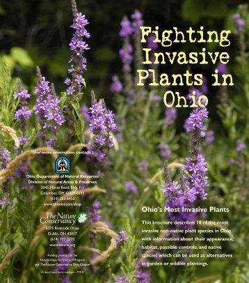 Fighting Invasive Plants in Ohio - Ohio Department of Natural ...