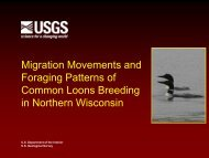 Migration Movements and Foraging Patterns of Common Loons ...