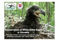 Conservation of White-tailed Eagle in Slovakia - DANUBEPARKS