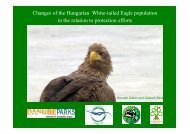 Changes of the Hungarian White-tailed Eagle ... - DANUBEPARKS