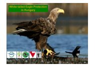 White-tailed Eagle Protection in Hungary - DANUBEPARKS