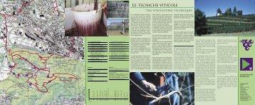 Tecniche viticole - Ente Turistico del Mendrisiotto e Basso Ceresio