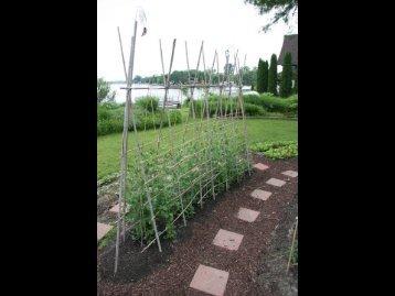 Bamboo trellis ideas in photos