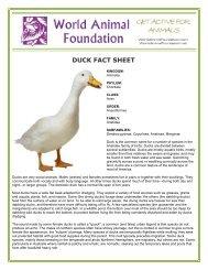 DUCK FACT SHEET - World Animal Foundation